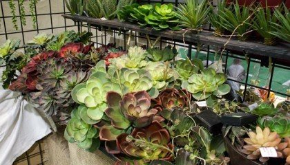 Outdoor Artificial Succulents